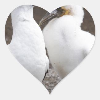 Miscellaneous - Masked Gannet Couple Pattern