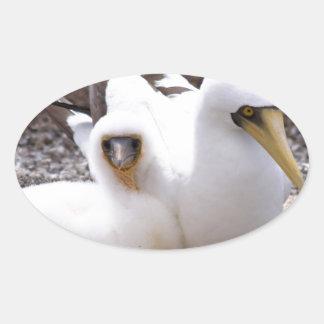 Miscellaneous - Masked Gannet & Pond Pattern