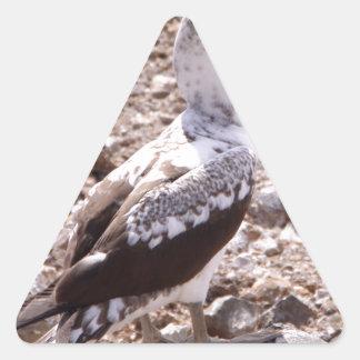 Miscellaneous - Masked Gannet & Rocks Pattern