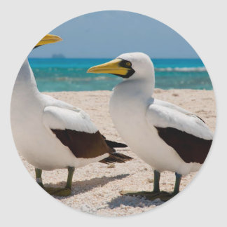Miscellaneous - Masked Gannet & The Beach Pattern