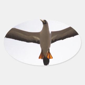 Miscellaneous - Masked Gannet & Wings Pattern