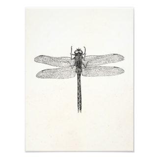 Modelo americano da mosca do dragão da libélula do impressão fotográficas