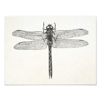 Modelo americano da mosca do dragão da libélula do impressão de foto
