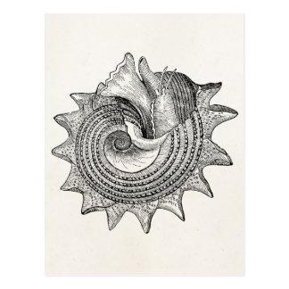Modelo antigo do pergaminho de Shell dos Seashells Cartão Postal