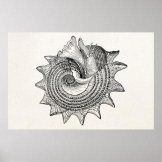 Modelo antigo do pergaminho de Shell dos Seashells Poster