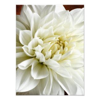 Modelo branco da flor do close up da dália do impressão de foto