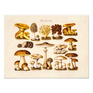 Modelo dos cogumelos da variedade do cogumelo dos impressão de foto