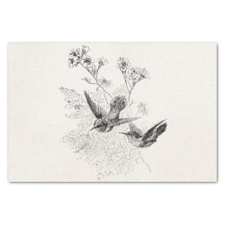 Modelo dos pássaros da antiguidade do colibri do papel de seda