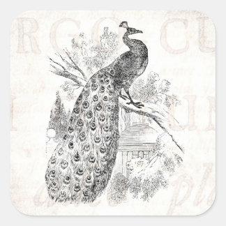 Modelo retro da ilustração do pavão dos 1800s do adesivo em forma quadrada