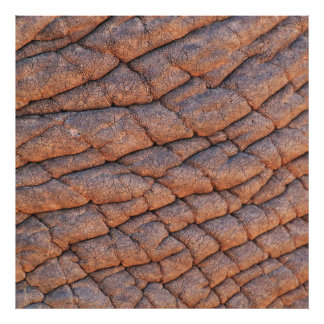 Modelo Wrinkly da textura da pele do elefante Impressão De Foto