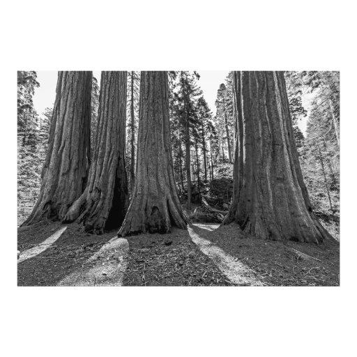 Monarca da floresta (preto & branco) artes de fotos