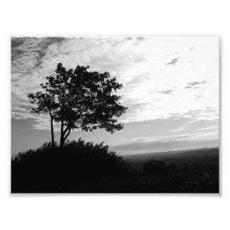 Monochrome da silhueta da árvore impressão de foto