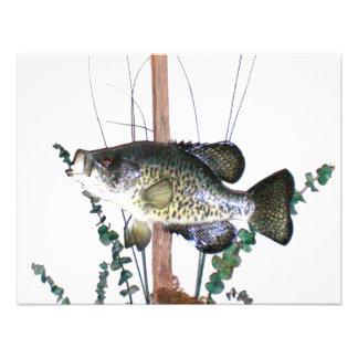 Montagem do tipo de peixe convite
