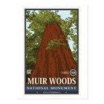 Monumento nacional 3 das madeiras de Muir Cartao Postal