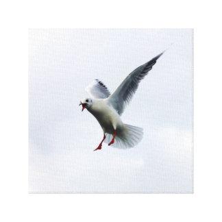 Mosca do pássaro no céu impressão em tela canvas