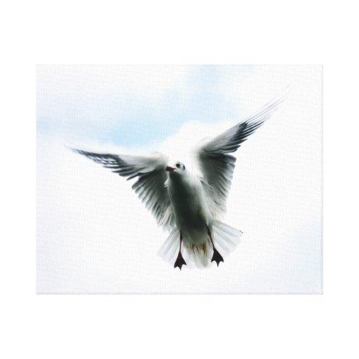 mosca do pássaro no céu impressão de canvas envolvidas