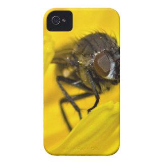 Mosca na flor capinhas iPhone 4