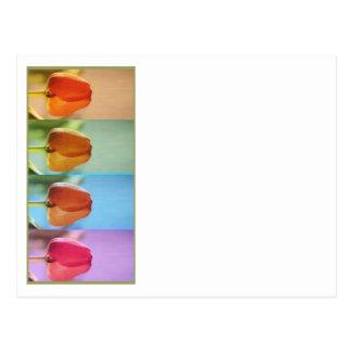 Mostra de flor da TULIPA Cartão Postal