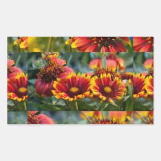 Mostra de flor: Palcos diferentes da flor selvagem Adesivos Em Formato Retangulares