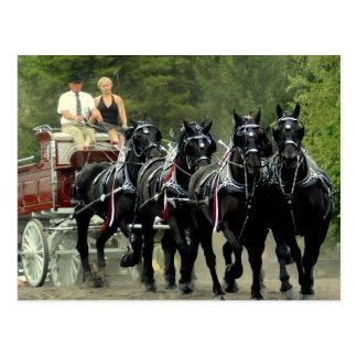 mostra do cavalo de esboço do va do culpeper cartão postal