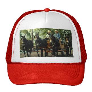 mostra do cavalo de esboço do va do culpeper bonés