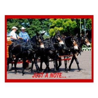 mostra do cavalo/mula de esboço do va do culpeper cartões postais