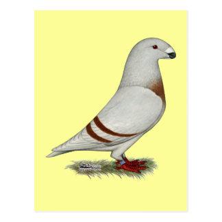 Mostre a piloto o pombo vermelho do bar cartão postal