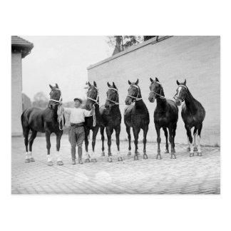 Mostre Cavalo, 1912 Cartões Postais