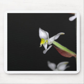Mousepad A flor da orquídea Ludisia descolora-se