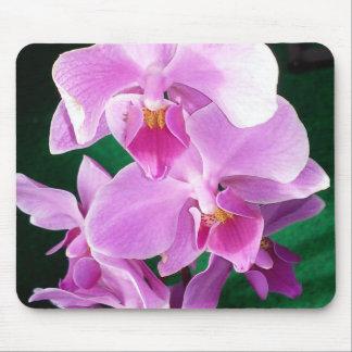 Mousepad A orquídea floresce close up no rosa