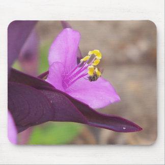 Mousepad a planta roxa chamou o spiderwort e uma abelha