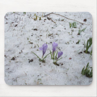 Mousepad Açafrão roxo na neve