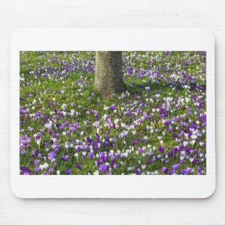Mousepad Açafrões do campo de flores na grama do primavera