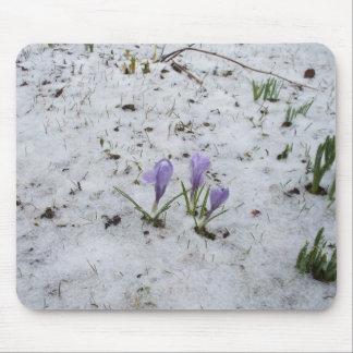 Mousepad Açafrões na neve