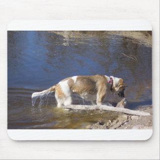 Mousepad akita na água