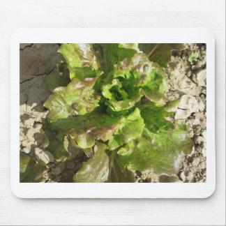 Mousepad Alface fresca que cresce no campo. Toscânia,