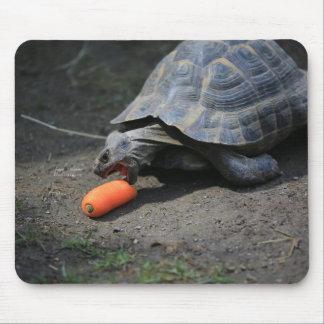 Mousepad Almoço da tartaruga