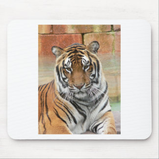 Mousepad Alugueres Tigres no projecto