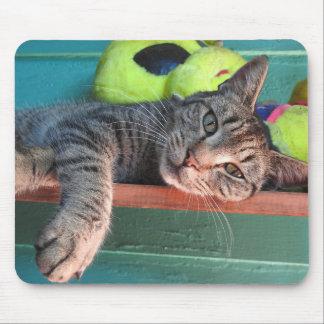 Mousepad Amor do gato