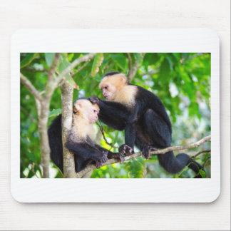 Mousepad Amor do macaco