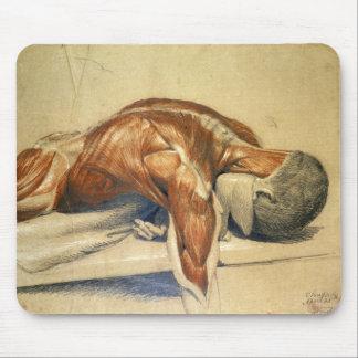 Mousepad Anatomia Charles Landseer do vintage um corpo