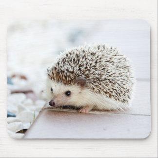 Mousepad Animal bonito do ouriço do bebê