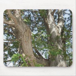 Mousepad Árvore de cedro