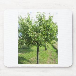 Mousepad Árvore de pera com folhas do verde e frutas