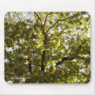 Mousepad Árvore verde da natureza