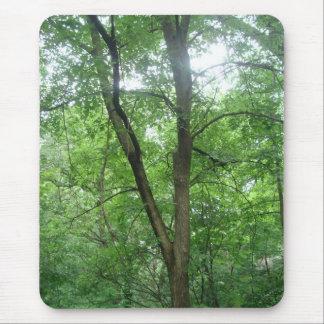 Mousepad Árvores