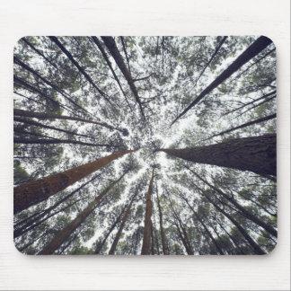 Mousepad Árvores que olham acima
