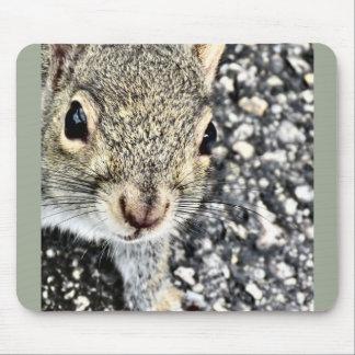 Mousepad Ascendente próximo do esquilo!
