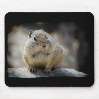 Mousepad Beira bonito do preto do tapete do rato do esquilo