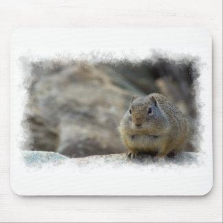 Mousepad Beira bonito super do branco do esquilo à terra